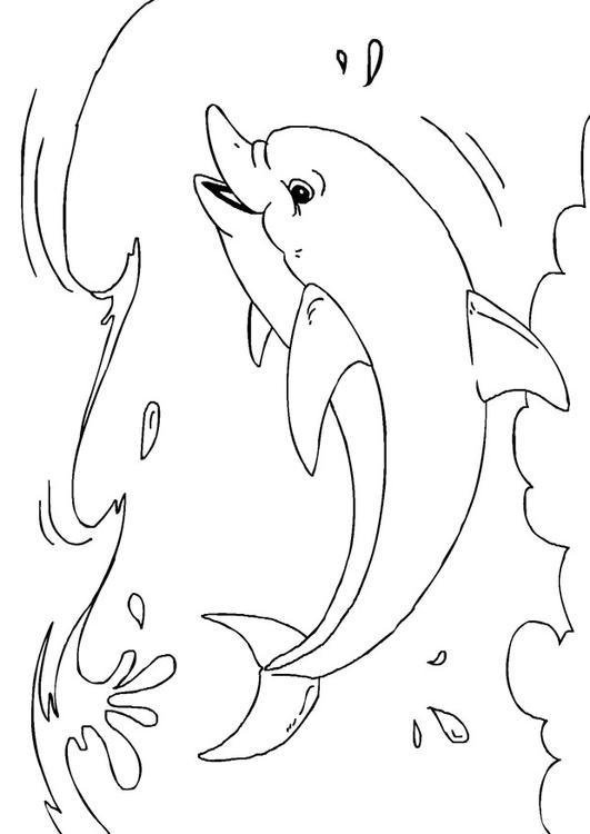 M 229 Larbild Delfin Bild 27233