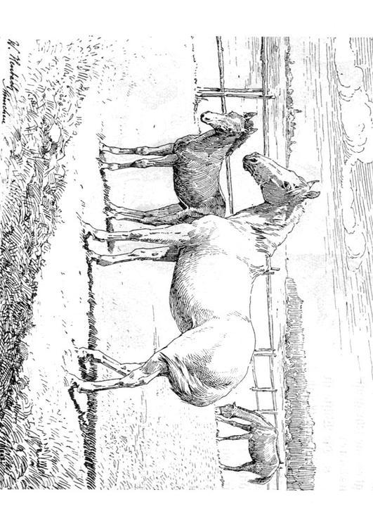 Paarden Kleurplaate M 229 Larbild H 228 St Och F 246 L Bild 9772