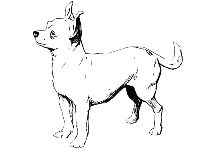 Kleurplaten Honden Labrador.Kleurplaat Hond Labrador Ausmalbilder Hunde 2 Ausmalbilder Gratis