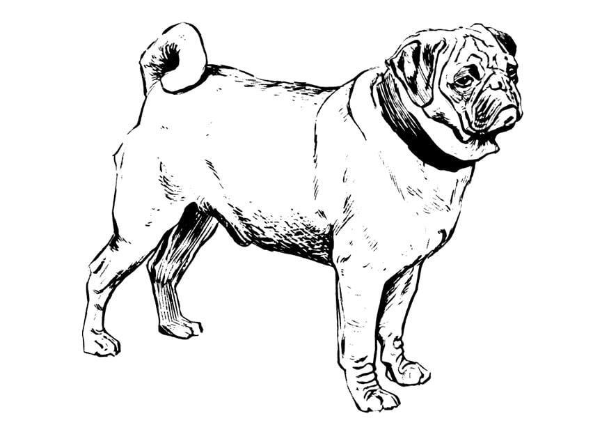 M 229 Larbild Hund Mops Bild 22749