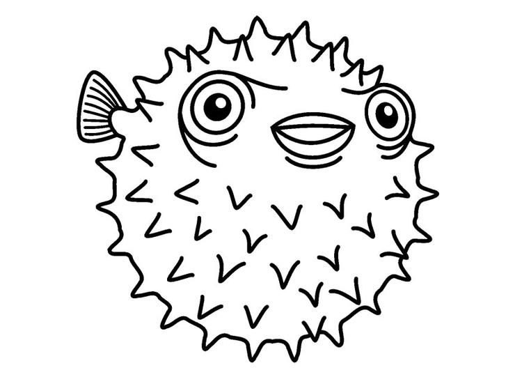 M larbild igelkottfisk bild 23083 for Disegno pesce palla