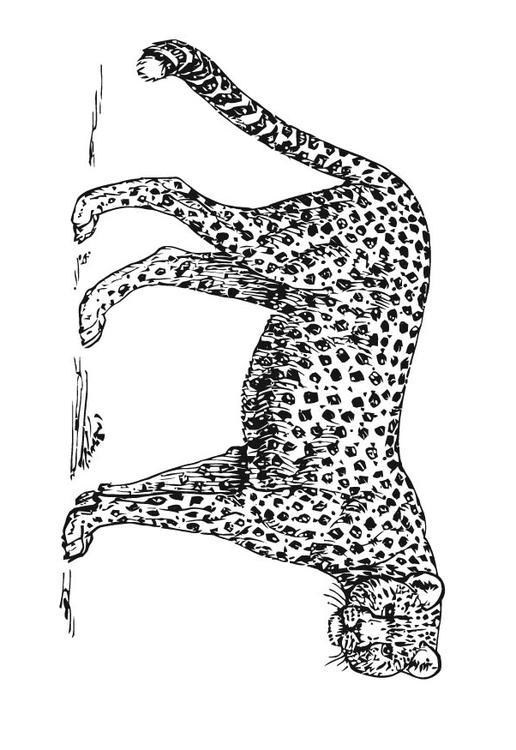 M 229 Larbild Leopard Bild 15727