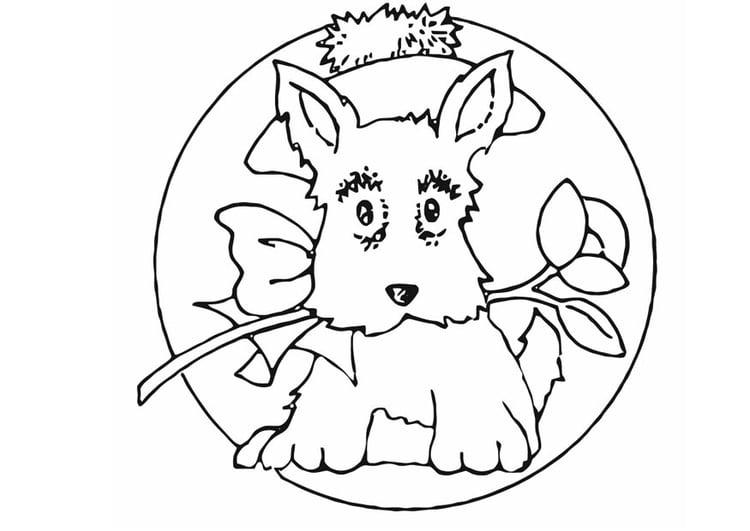M 229 Larbild Liten Hund Bild 16589
