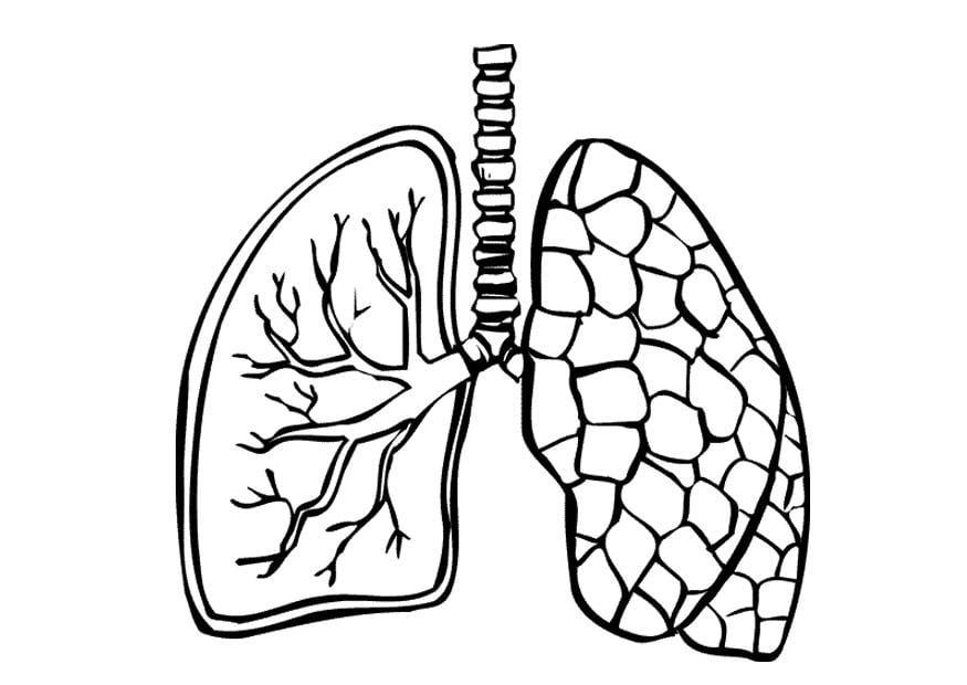 Blank Human Body Organs