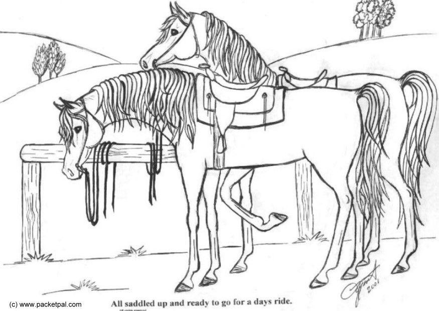 Paard Opgezadeld Kleurplaat M 229 Larbild Sadlade H 228 Star Bild 6088 Images