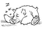 Målarbild sovande björn