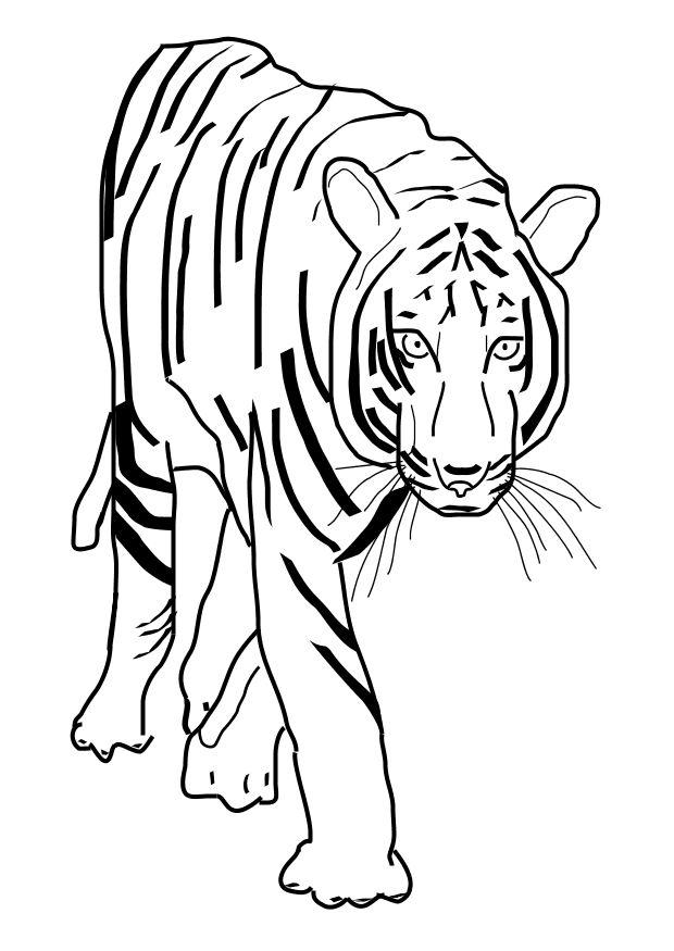 M 229 Larbild Tiger Bild 10101 Images