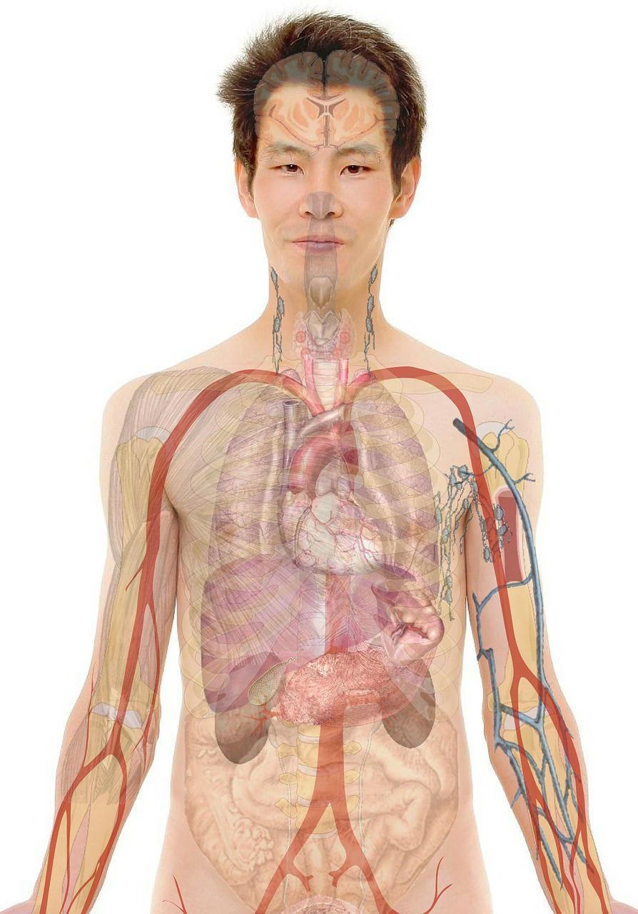Bild Anatomi