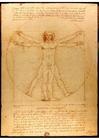 bild Den vitruvianske mannen av Leonardo da Vinci