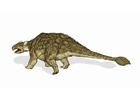 bild dinosaurie - ankylosaurus 2
