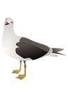 bild fågel - mås