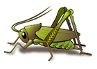 bild gräshoppa