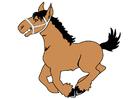 bild häst