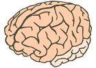 bild hjärna