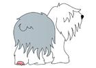 bild hund - stubbsvans