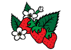 bild jordgubbar