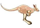 bild känguru