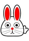 bild kanin, framsida