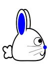bild kanin-sida