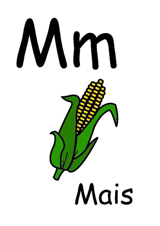 M. Bild