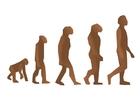 bild mänsklig evolution