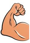 bild muskulär