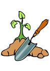 bild plantera träd