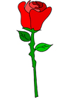 bild röd ros