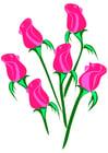 bild rosor