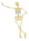 bild skelett