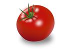 bild tomat