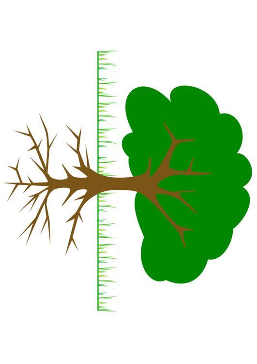 Bild träd med rötter Bild 20764