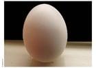 Foto ägg