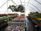 Foto blommor och plantor