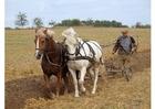Foto bonde som plöjer