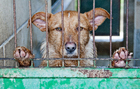 Foto djurs lidande