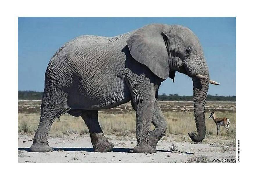 Ein Wunderschöner Elefant Und Macht Sich Bestimmt Gut In