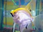 Foto fisk