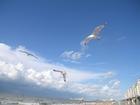 Foto fiskmåsar vid stranden 3