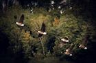 Foto flyttfåglar