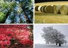 Foto fyra årstider