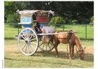 Foto häst och vagn