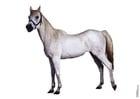 Foto häst