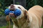 Foto hund med leksak