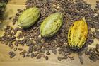 Foto kakaobönor