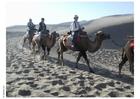 Foto ökenfärd med kameler