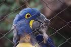 Foto papegoja i bur