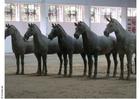 Foto statyer av hästar, Xian