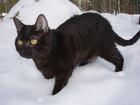 Foto svart katt