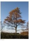 Foto träd